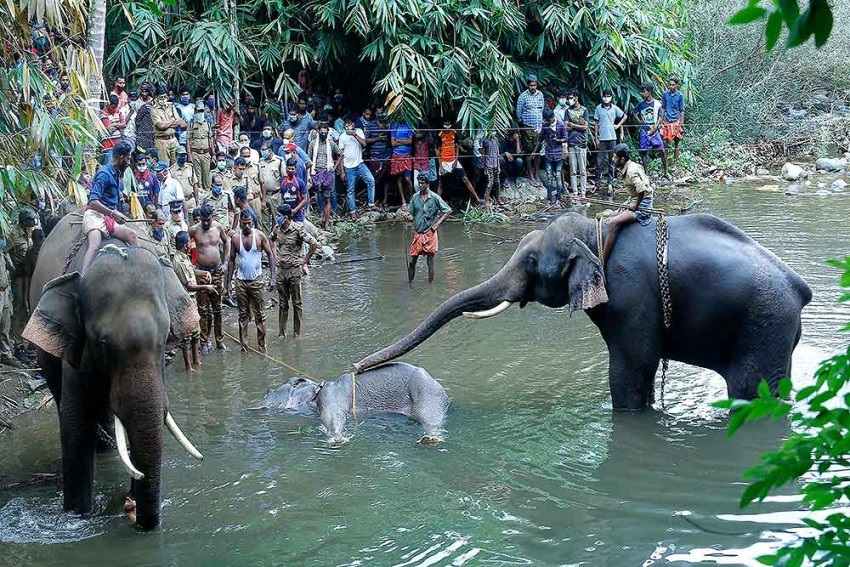 India No Country For Elephants, Either In The Wild Or In Captivity