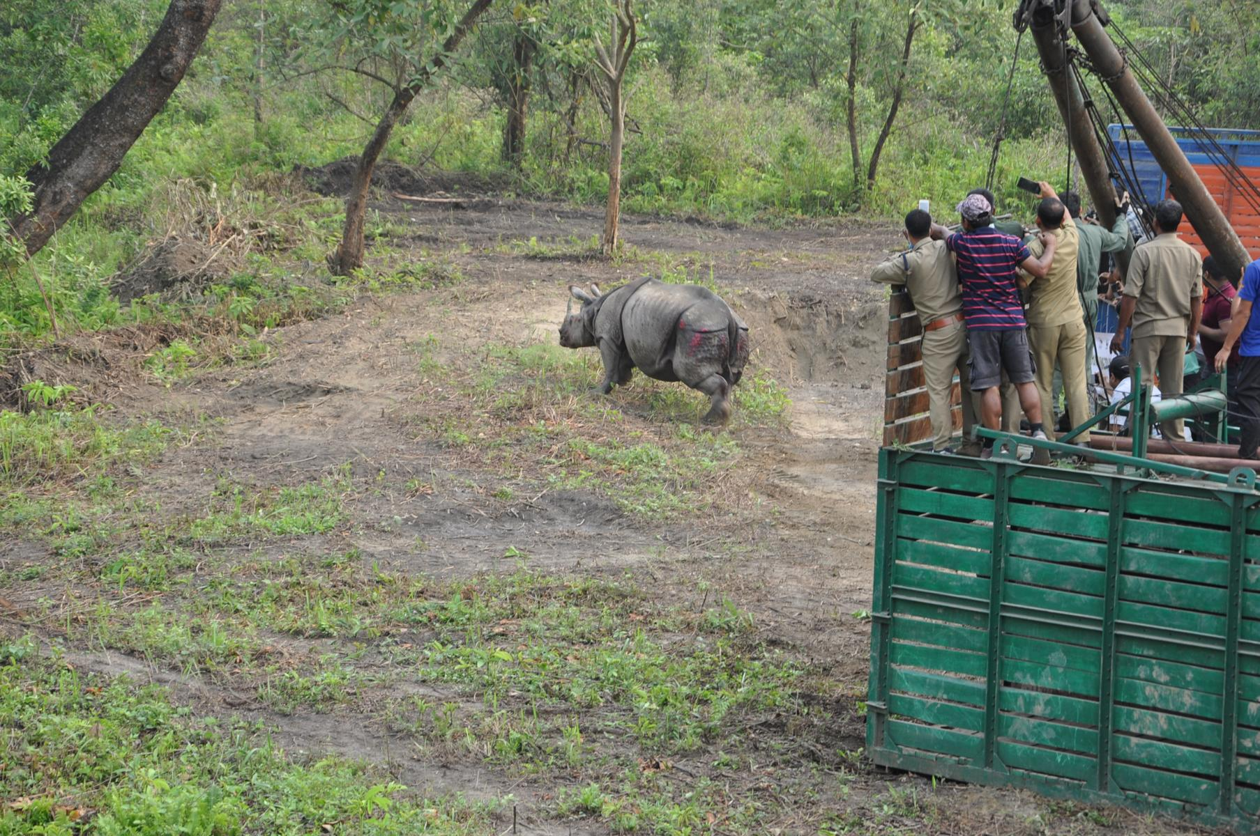 Manas Gets 2 More Rhinos