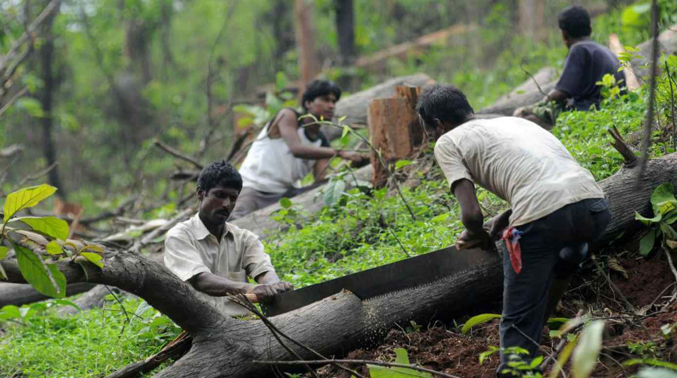 Supreme Court Questions the Necessity of Chopping Trees for Widening Roads