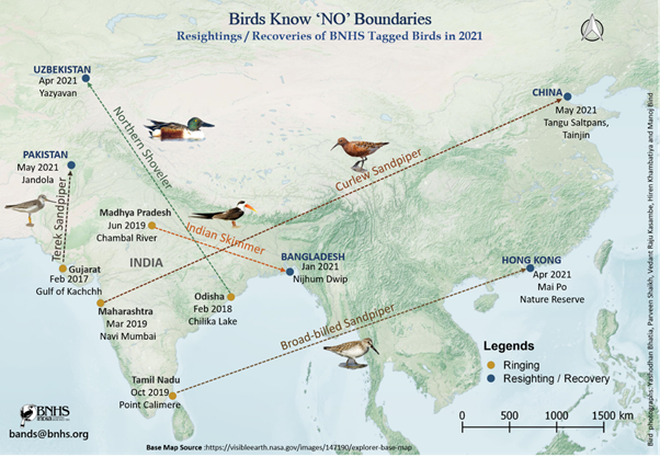 A few birds tagged in India were resighted far away from its border in the migratory season of 2020-21 Map Source: Bird Ringing Database, BNHS